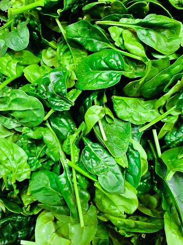 spinach green leafed plant vegetable