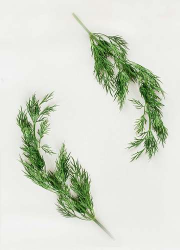 plant green leafed plants on white background dill