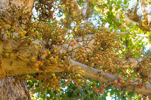 plant green leafed tree during daytime fruit