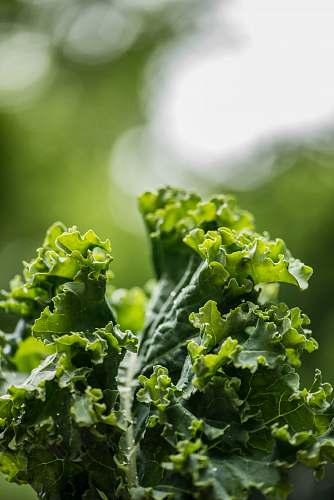 plant green plant on selective focus photography kale