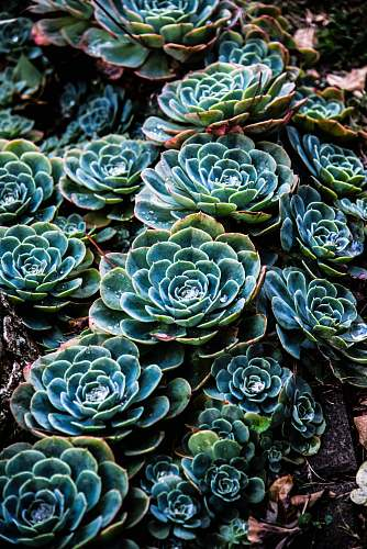 vegetable green succulent plant cabbage