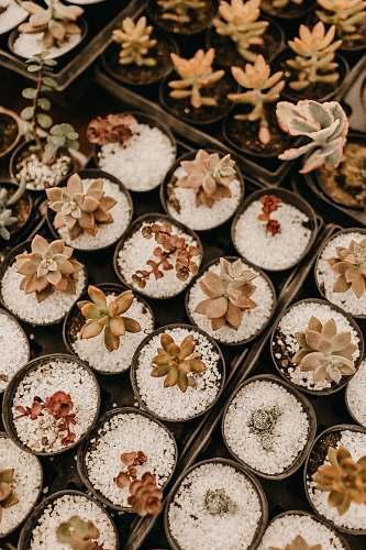 cake green succulents cupcake