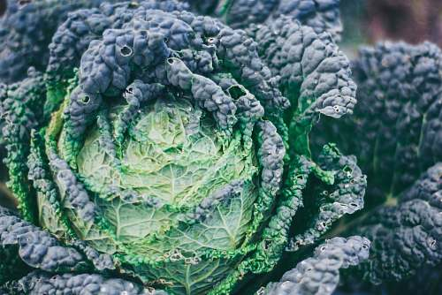 vegetable green vegetable kale