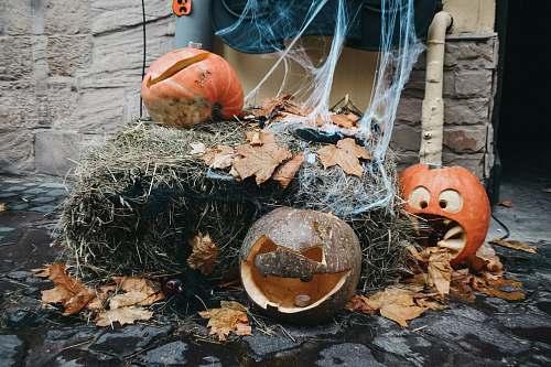 plant Halloween decor pumpkin