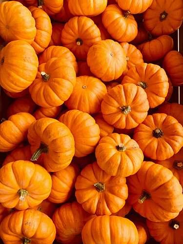 plant ile of orange pumpkins vegetable