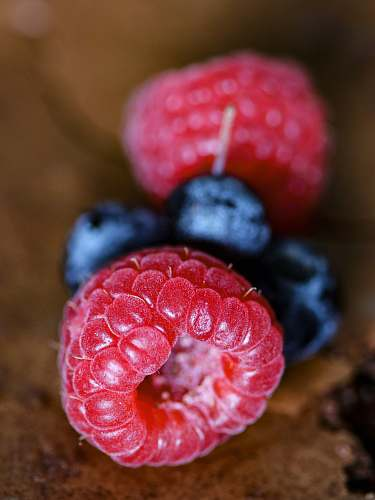plant macro photography of raspberry and blueberries blueberry