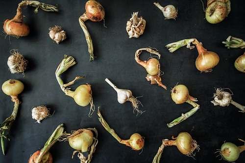 plant onion decor produce