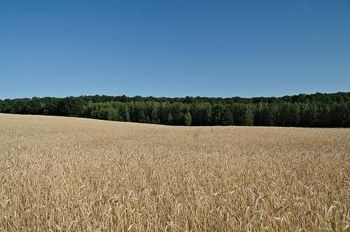plant open field under clear blue sky produce