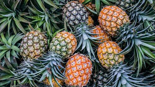 plant orange and green pineapple fruits pineapple