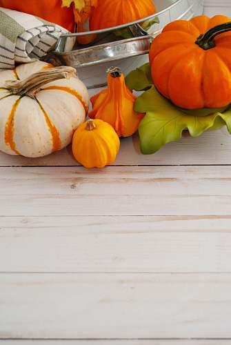 plant orange pumpkin and orange pumpkin pumpkin