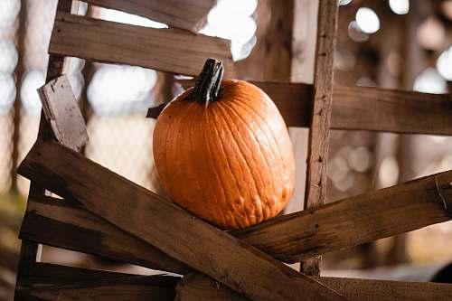 plant orange pumpkin on wooden frame pumpkin