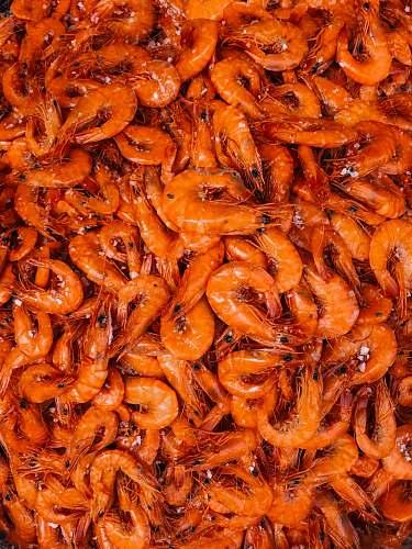 animal orange shrimp lot seafood