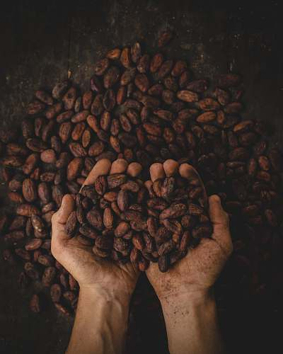 coffee person holding dried beans colombia