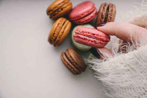 photo hand person holding french macarons macaroon free for commercial use images