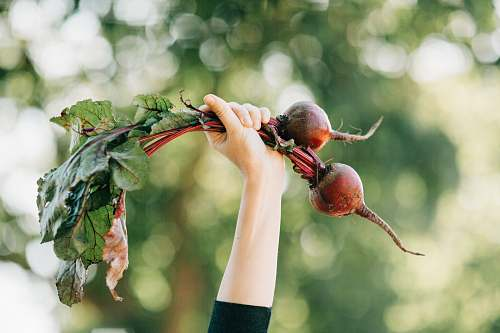 plant person holding two vegetables produce