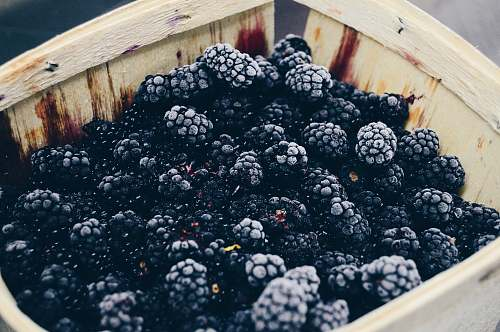 fruit photo of blackberry fruits fresh