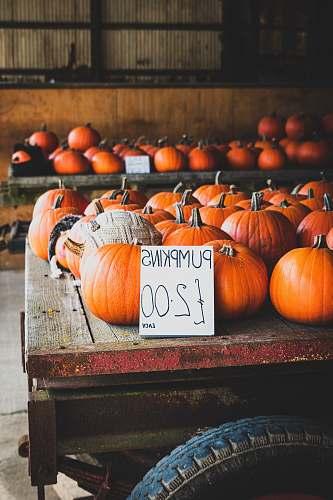 plant photo of orange pumpkings vegetable