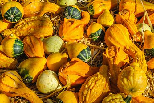plant pile of gourds gourd