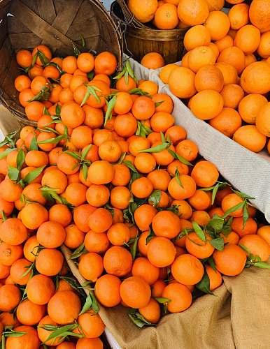 plant pile of orange fruits citrus fruit