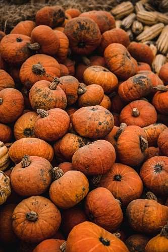 plant pile of pumpkins pumpkin