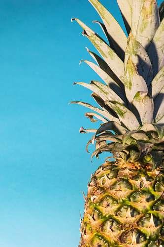fruit pineapple fruit pineapple