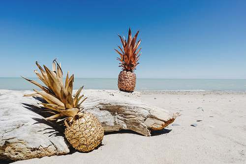 fruit pineapple fruit on shore pineapple
