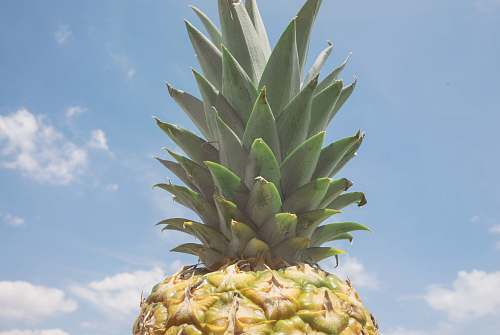 fruit pineapple fruit over blue and cloudy sky pineapple