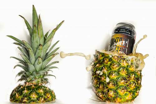 plant pineapple fruit pineapple