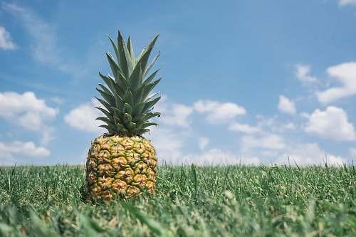 pineapple pineapple on grass fruit