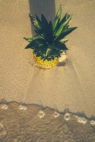 photo fruit pineapple on sand pineapple free for commercial use images