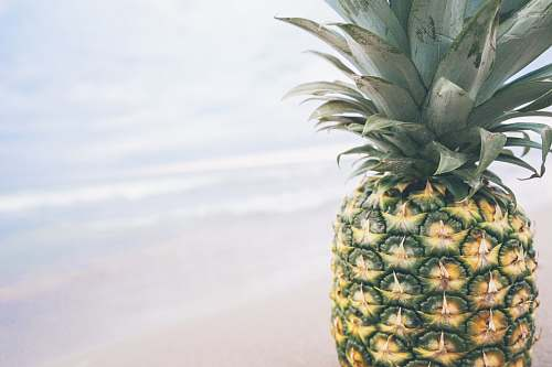 pineapple pineapple with body of water background fruit