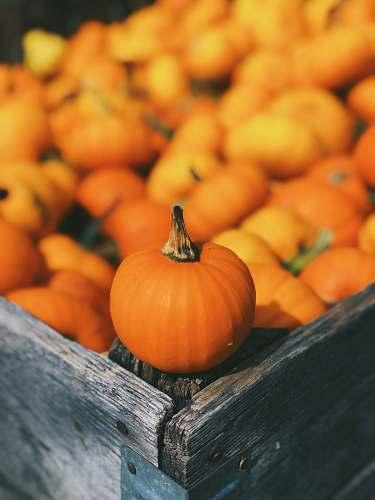 human pumpkin on brown box pumpkin