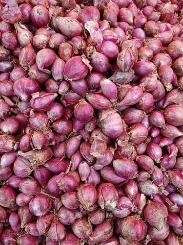 plant purple onions onion