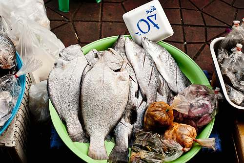 fish raw meat on green plastic container market