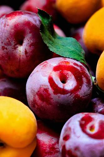 plant red apples fruit
