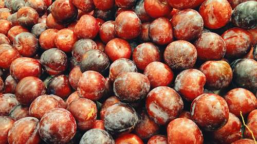 fruit red berries photo plum