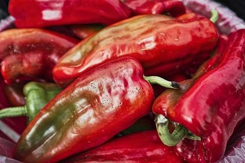 plant red chilli lot animal