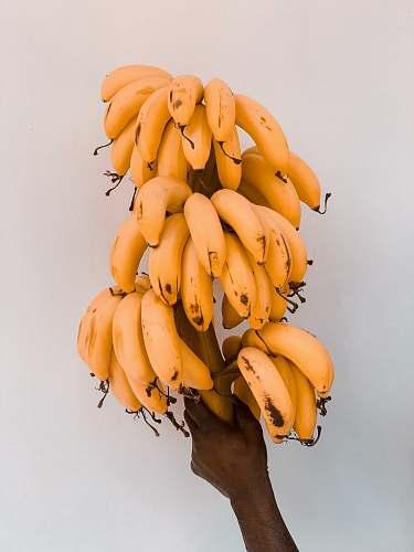 plant ripe bananas fruit