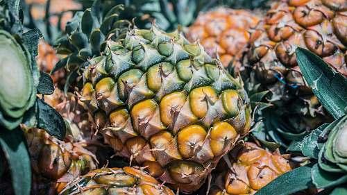 fruit ripe pineapple plant