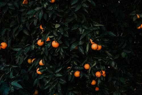 plant round orange fruit fruit