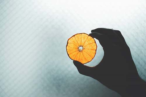 plant round orange illustration citrus fruit