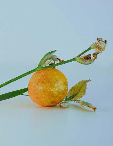 fruit round yellow fruit citrus fruit