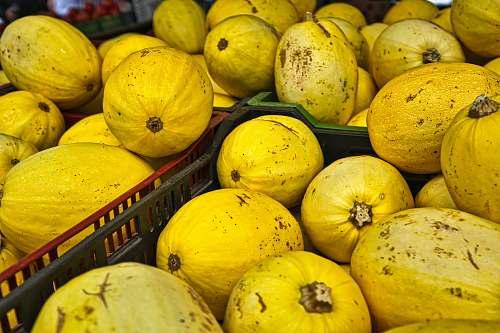 plant round yellow fruit fruit