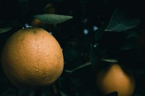 fruit selective focus photo of citrus fruit citrus fruit
