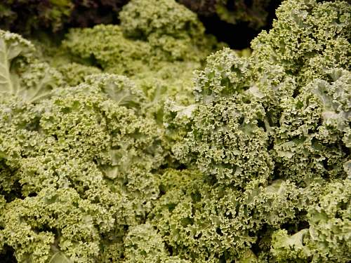 kale selective focus photo of green-leafed plants cabbage