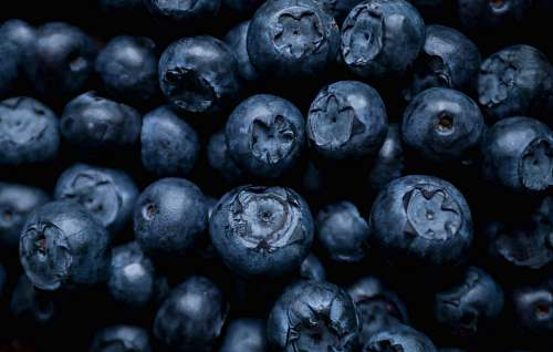 fruit selective focus photography of blue berries blueberry