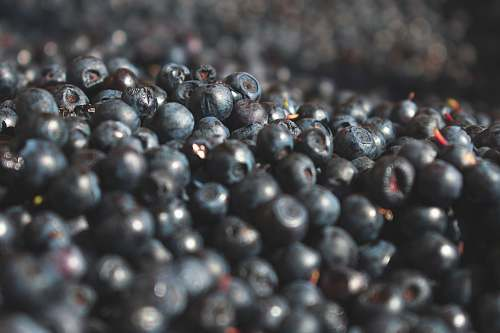fruit selective focus photography of blueberry wallpaper blueberry