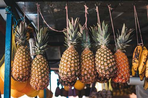 fruit several hanging pineapples in selective focus photography pineapple