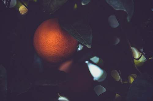 fruit shallow focus photo of orange fruit citrus fruit