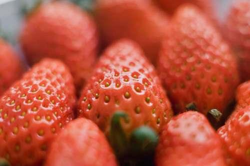 fruit shallow focus photo of strawberries flora
